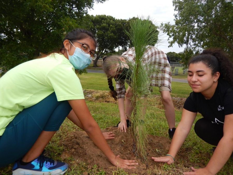 Cape Highs Key Club plants trees in the community